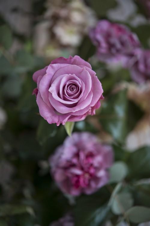 https://kwiatynawarsztacie.pl/wp-content/uploads/2017/08/DSC_4562.jpg