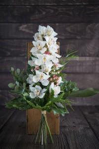 Orchidea i już