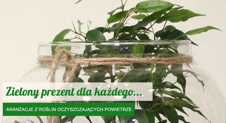 https://kwiatynawarsztacie.pl/wp-content/uploads/2018/02/zielony-prezent.jpg
